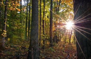 Мягкое солнце ласково освещало осенний лес