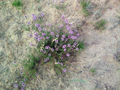 Блог, как полевой цветок